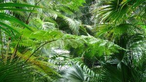 hojas verdes en la selva